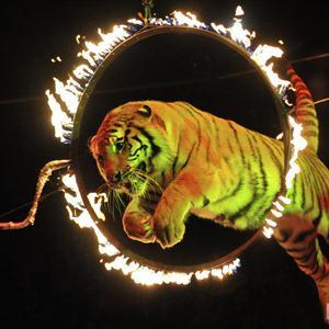 Цирки Верхней Салды